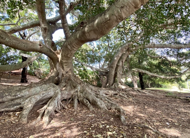 Huge fig trees that have taught generations of children to climb shade this fantastic playground