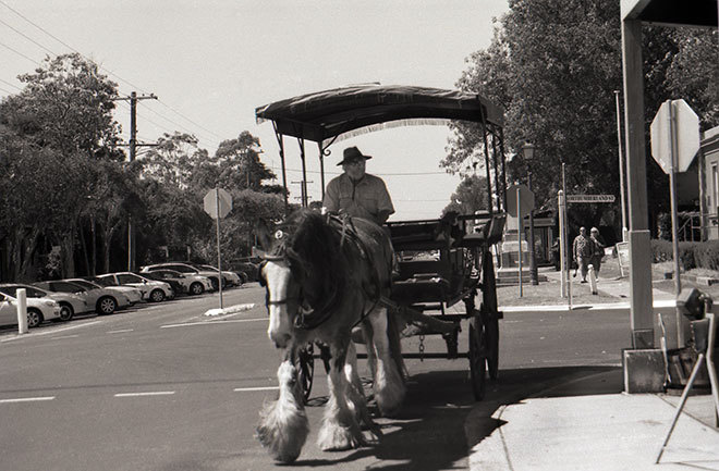 Clydesdale, Horse and buggy, Horse drawn carriage, draft horse, brewery horse, working horse, black and white photo, film, film photo, monochrome film,