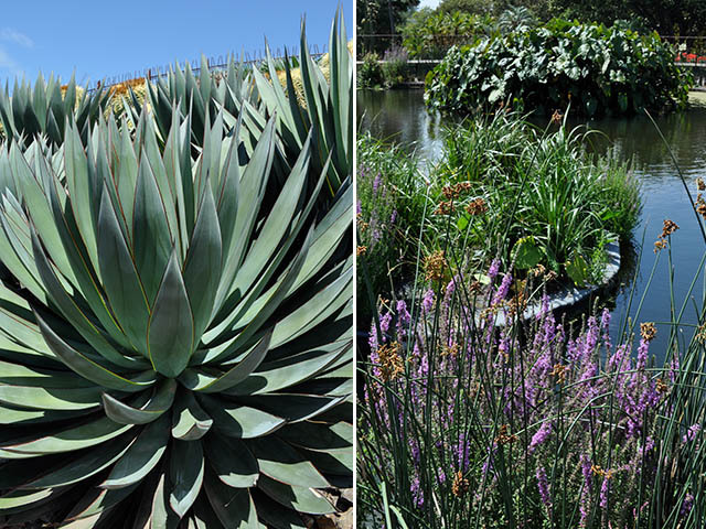 Decorative succulents on the volcano slope and floating islands in the crater lake
