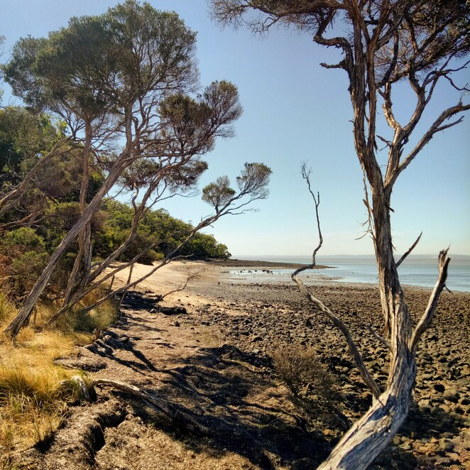 French Island, westernportbay, ferry ride, isolated, wilderness, bike riding, hiking, nature, national park,