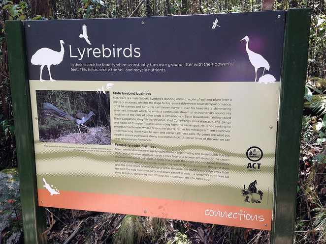 lyrebirds, canberra, tidbinbilla nature park, canberra, bushwalks, short walks, ACT, walking trails, wildlife, birds, animals,