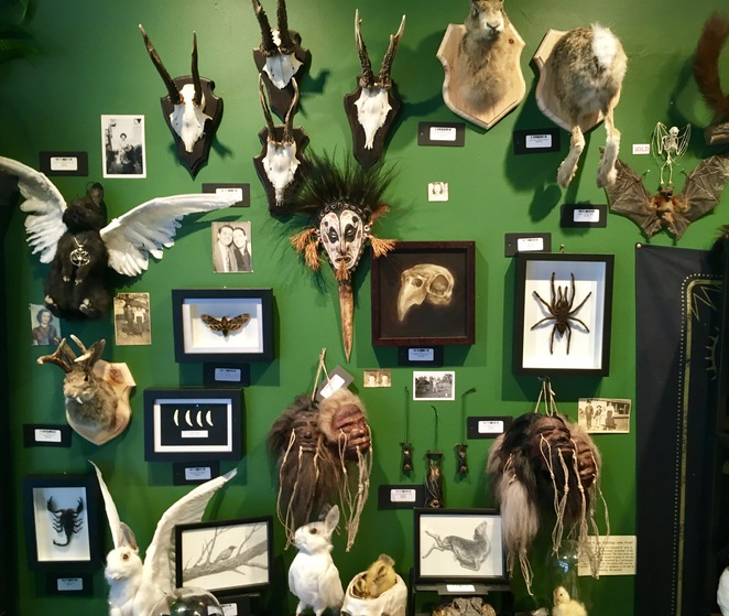Odd Mountain Oddities, taxidermy, macarbre collectibles, katoomba, oddities, Jade Jackson Photography