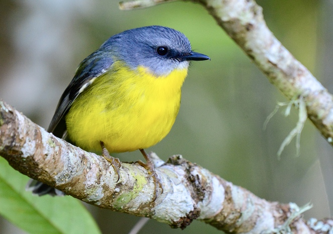 Thiess Memorial Campground is home to a variety of birds and wildlife