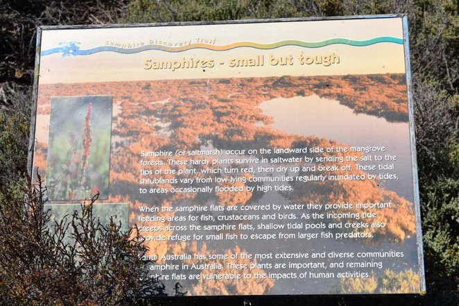 Samphire Discovery Trail