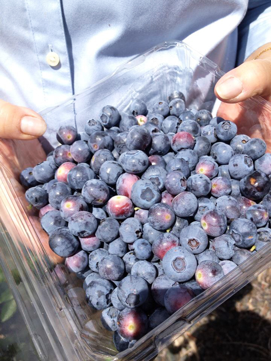 10 Berry Farms to Visit in Summer - Melbourne