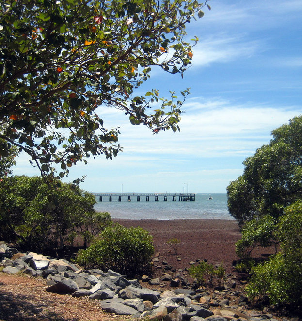 The Wellington Point Jetty seen behind the mangrove wetlands
