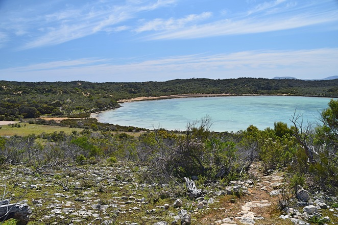 Yangie Bay Walks, Yangie Bay, Coffin Bay, Coffin Bay National Park, Heath Goanna, Wallaby, Yangie Island