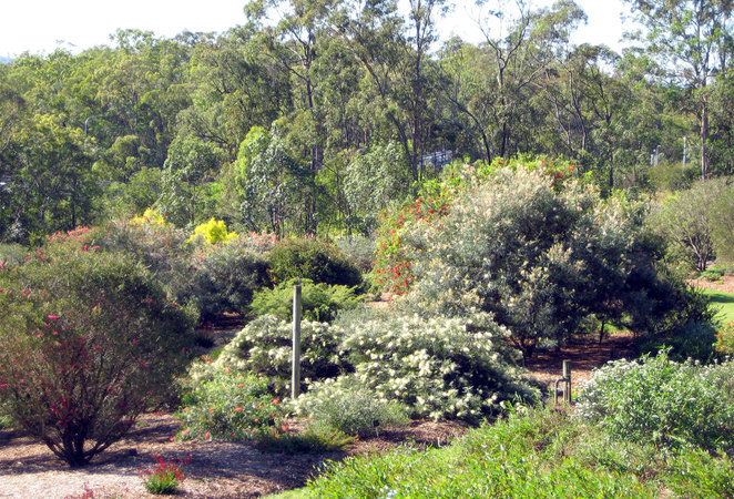 Some of the flowering bushes, trees and plants in the Australian Flower Garden
