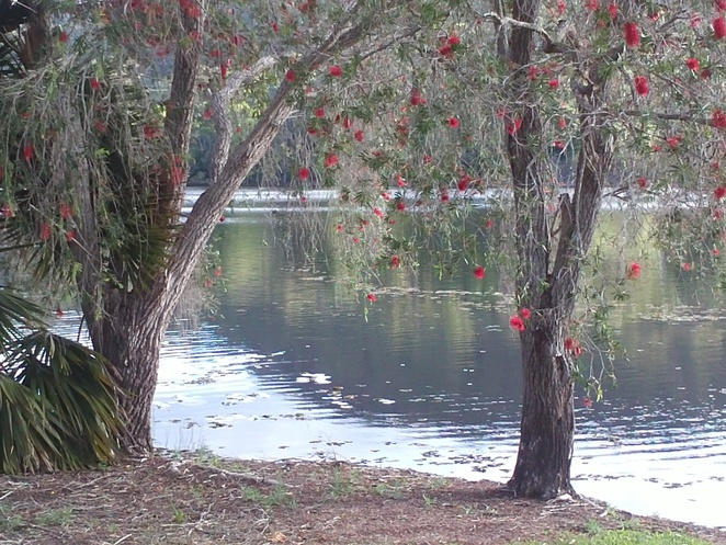 beautiful trees, lake, ducks, kookaburra