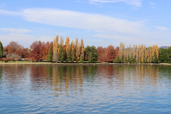 Canberra, autumn, autumn in Canberra, where to see Canberra's autumn leaves, what to do in autumn, what to do in Canberra this autumn