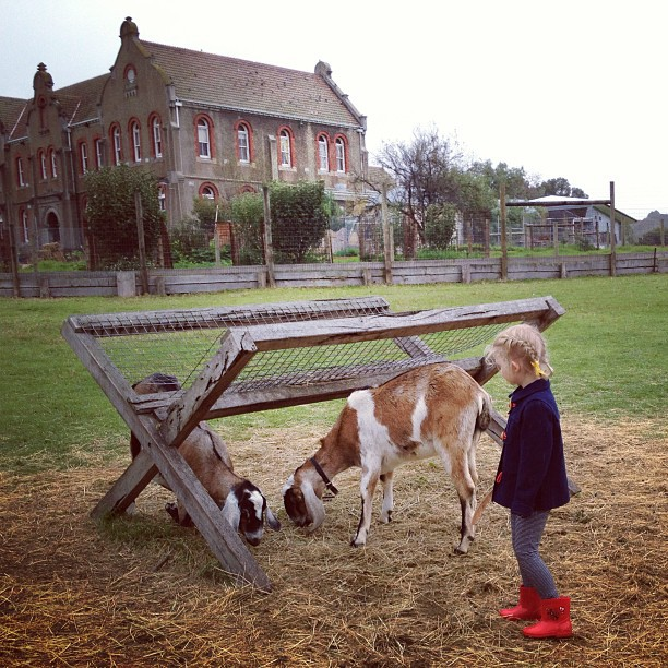 collingwood children farm