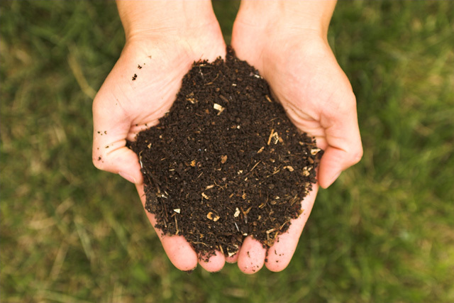 Compost. This image is from Wikimedia Commons (by Kessner Photography).