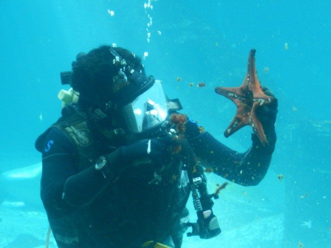 diver, starfish, reef, aquarium, Townsville, Ref HQ,