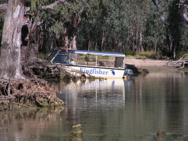 kingfisher, barmah, echuca, cruise, eco-tourism