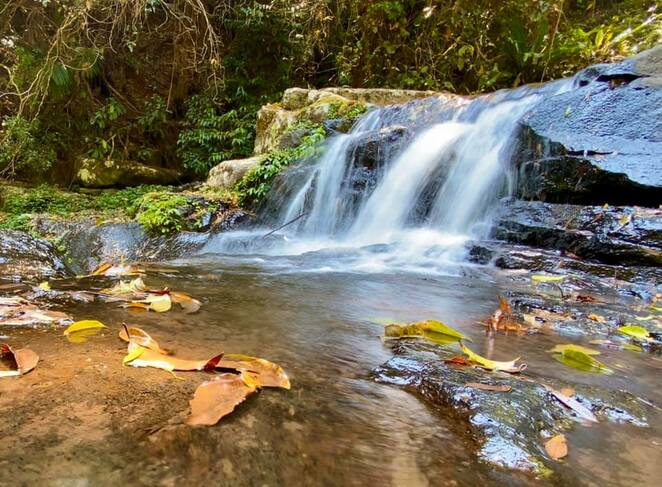 A cascade at Picnic Rock, one of the many places Lamington Spiny Crayfish like to hang out