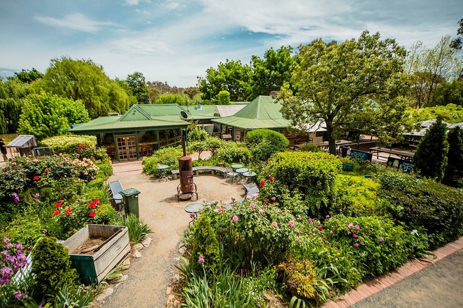 rose cottage inn, canberra, gilmore, beer garden, ACT, pub, live music, best beer garden in canberra,