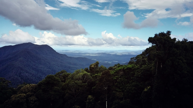 Skywalk Rainforest Gondwana Dorrigo