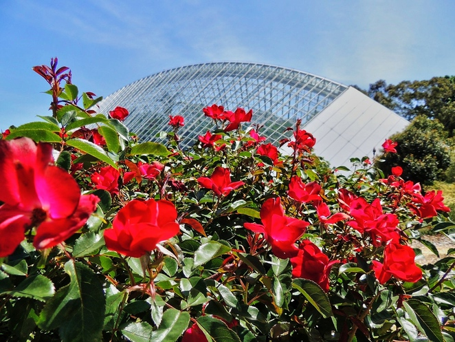 valentines day, botanic gardens, adelaide botanic gardens, in adelaide, love notes, rose garden, international rose garden, museum of economic botany, palm house, bicentennial conservatory