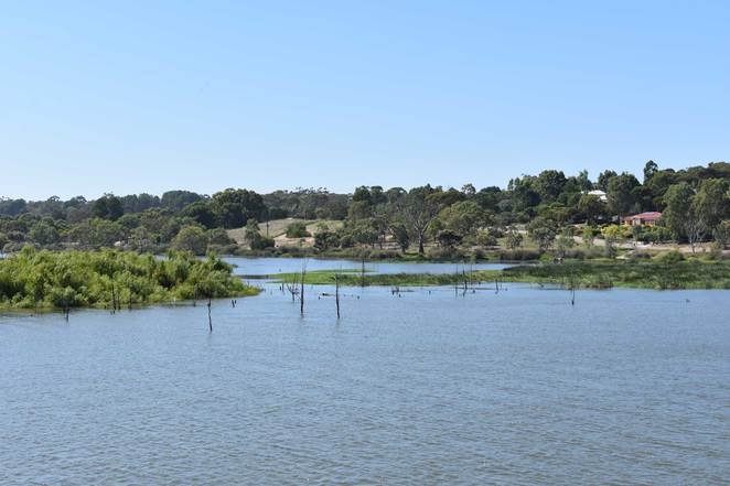 wetlands, murray river, riverglades