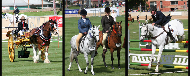 Adelaide, Royal, Show, 2017, horses in action
