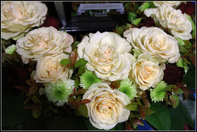 Barossa, Rose, Flower, Show, 2016, cream blooms
