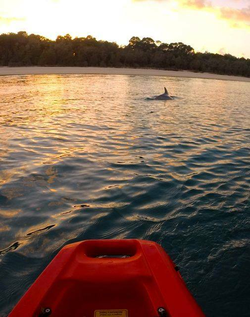 A dolphin passing between our kayak and the beach at Bulwer Wrecks at sunset