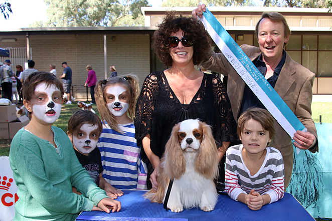 cavalier, king, charles, spaniel, capers, funday, Best-In-Show