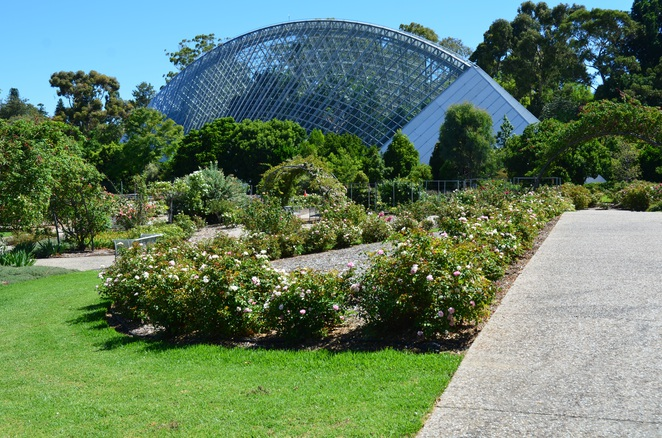 International Rose Garden, Adelaide Botanic Gardens, Valentines day