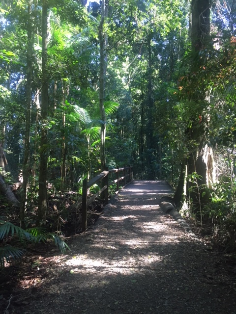 Mary Cairncross Scenic Reserve, Rainforest walk, ecological island, bird haven, giant earthworms, pademelons, an oasis of tropical fauna and flora