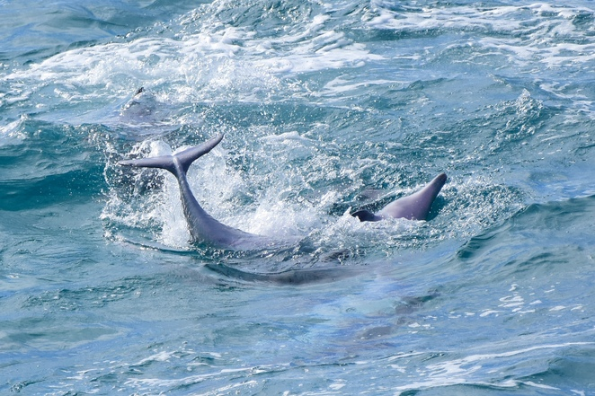Watch from above as dolphins surf and play beneath the gorge