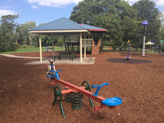 park, dog park, faulkner park, graceville, chelmer, playground, flying fox, swings, see saw, play equipment, grass, grassy areas, nature, picnic, dog friendly, walk