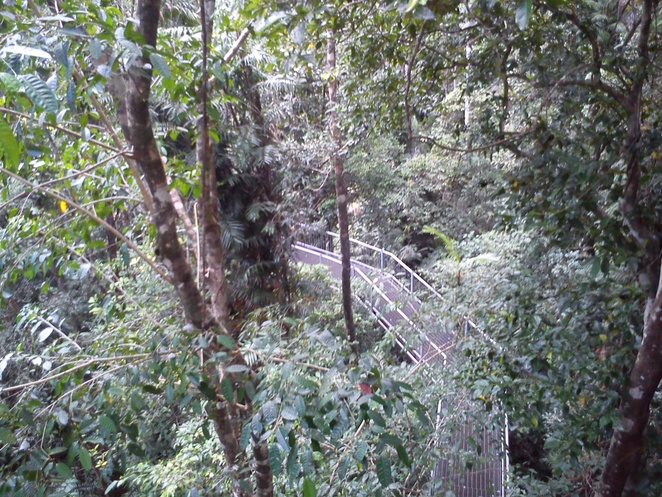 rainforest discovery centre, canopy tower, Daintree rainforest, things to do near Cairns, family friendly, far north queensland