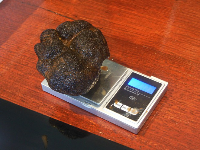 weighing a black truffle
