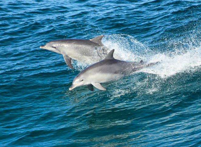 Watch dolphins surfing from the Gorge Walk's lookouts