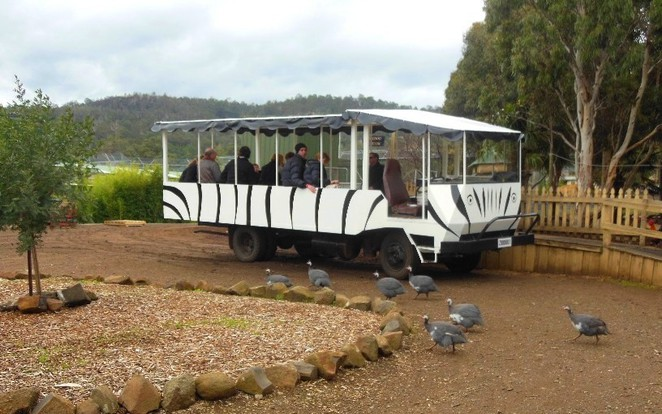 zoodoo wildlife park safari bus