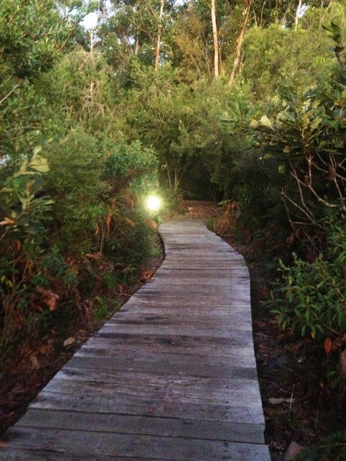 Bush Tucker Walk Kingfisher Bay Resort