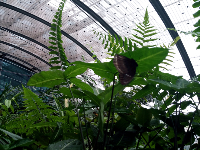 Butterfly Garden Changi International Airport Terminal 3 Singapore Travel Interesting