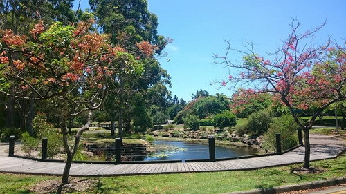 dig,botanic gardens,discovery in the gardens,gold coast,