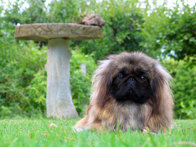 dog fluffy cute grass stone table meditation