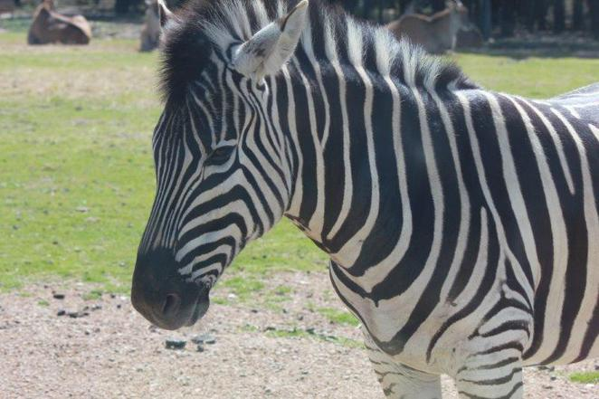 Dubbo, Taronga Western Plains Zoo, Savannah Cabins, family friendly accommodation, accommodation at the zoo, safari experience, Dubbo Zoo, kid friendly, animals galore