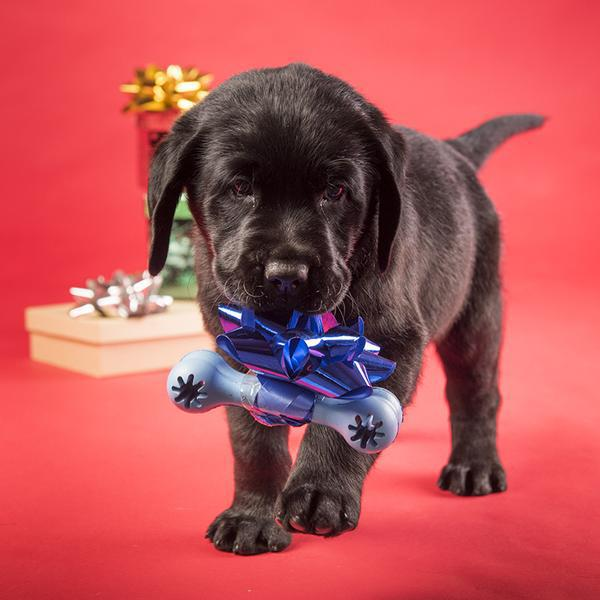 Guide Dogs Presentation Day, Pawfect Presents