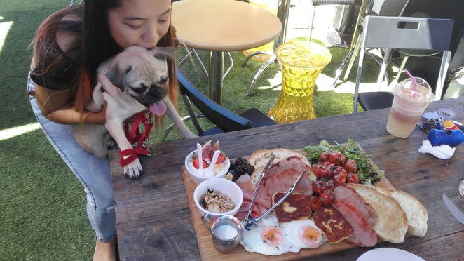 kith n chow, dog cafe, cafe, food, food truck, mt gravatt, brisbane, pug