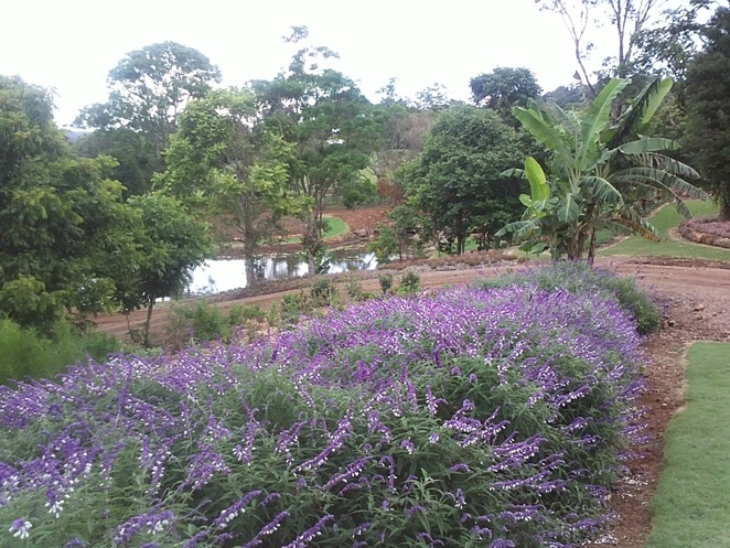 lavendar, flowers, gardens beautiful, tranquil