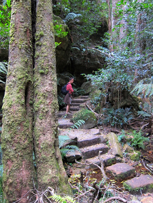 walks, The grand canyon, Blue Mountains, NSW