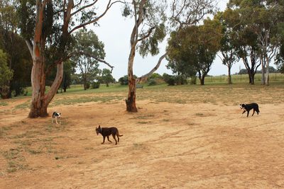 belconnen dog park, dog friendly places, off leash areas, dog parks in canberra
