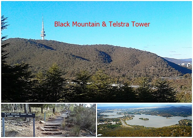 black mountain, telstra tower, canberra, walks, hikes, bushwalks, ACT, walking, national parks, canberra nature park, ACT,
