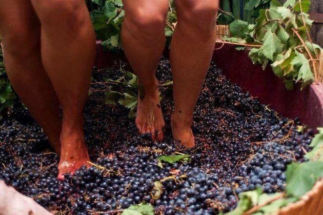 Grape Stomp, Peter Drayton Wines, Hunter Valley