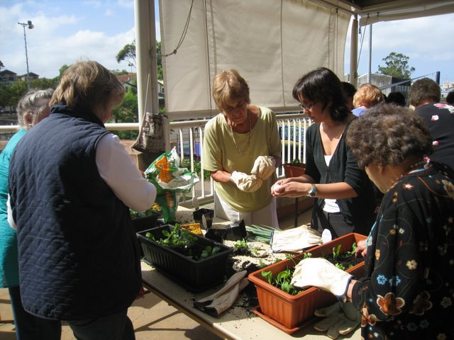 inner west, sydney, leichardt council, growing food, ecoliving