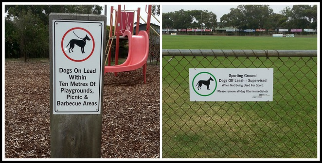 Ocean Grove Memorial Recreation Reserve, Dog Exercise Area, Ocean Grove, Dog walking, dogs permitted