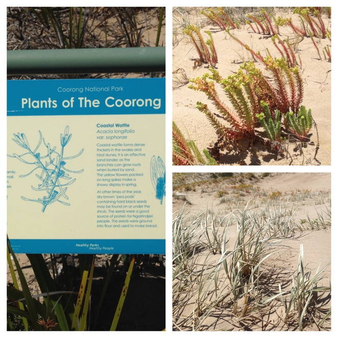 Plants of the Coorong